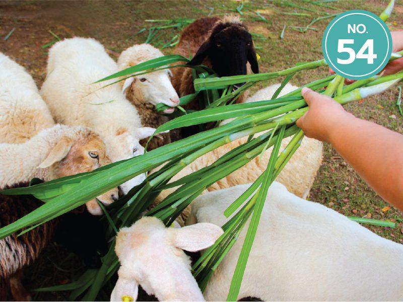 54.The Scenery-Vintage-Farm-ลำดับ